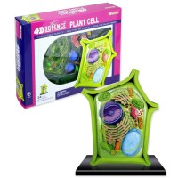 4D Science Plant Cell Model