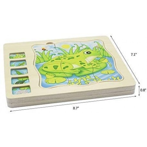 Wooden 5 Layers Life Cycle Of A Frog Montessori Puzzle