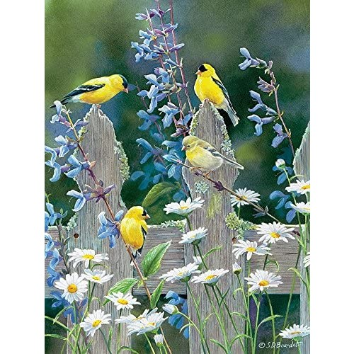 Outset Media Goldfinch
