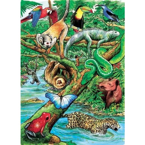 Life In A Tropical Rainforest Puzzle