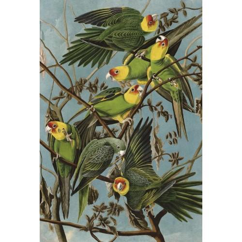 Artifact Puzzles Audubon Carolina Parakeets Wooden Jigsaw