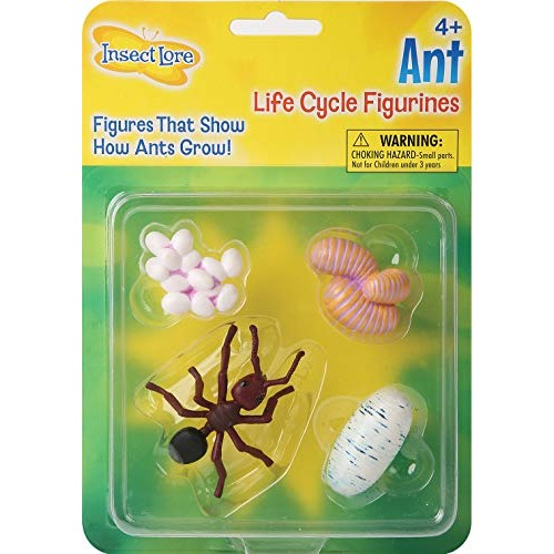 Ant Life Cycle Toy – 4 Piece Set Shows Of An