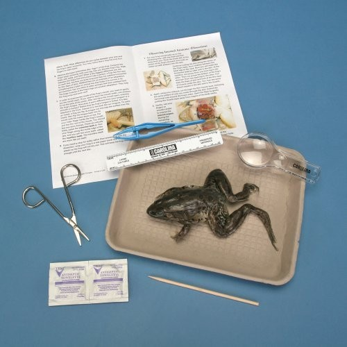 Young Scientists Frog Dissection Kit