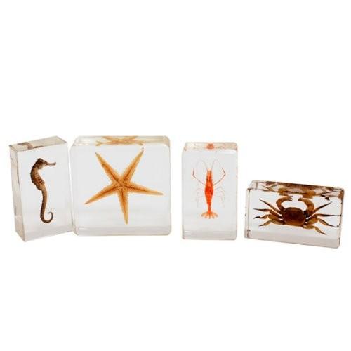 REALBUG Sea Life Specimen 4pc Set