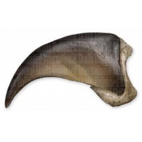 American Black Bear Claw Small – 25cm Museum Quality Replica