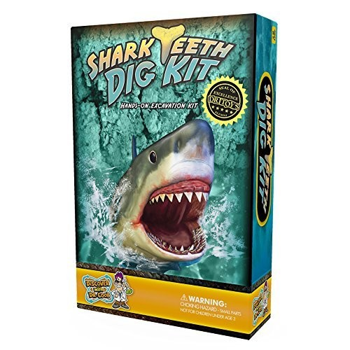 Discover with Dr Cool Shark Tooth Dig Kit – Excavate 3 Real Teeth Specimens