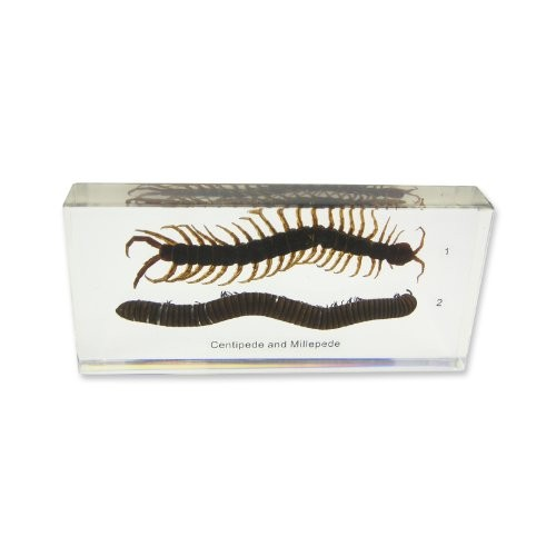 REALBUG Centipede & Millipede Comparison