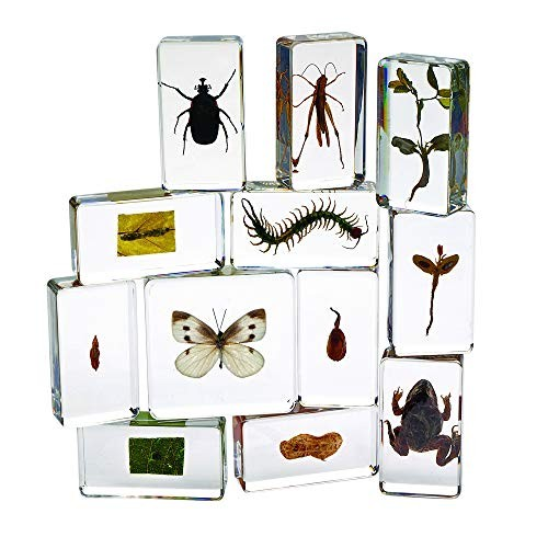 Excellerations Acrylic Specimens Garden Friends Lifecycle of a Butterfly Growth Peanut Seed Set 12 STEM Early Science Item # ACSET2