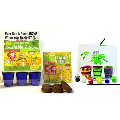 TickleMe Plant Deluxe Greenhouse Kit with 6 Color Paint Set for Kids 10 Fun Activities Grow The House That Closes its Leaves