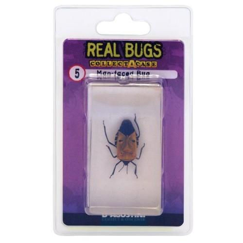 DeAgostini Real Bugs Man Faced Bug