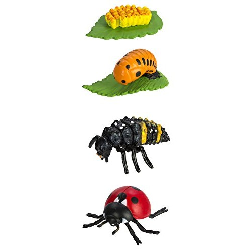 Safari Ltd Safariology Collection – Life Cycle of a Ladybug Includes Egg Larva Pupa and Replicas Educational Hand Painted Figurines Quality Construction from Safe BPA Free Materials For Ages 4 Up