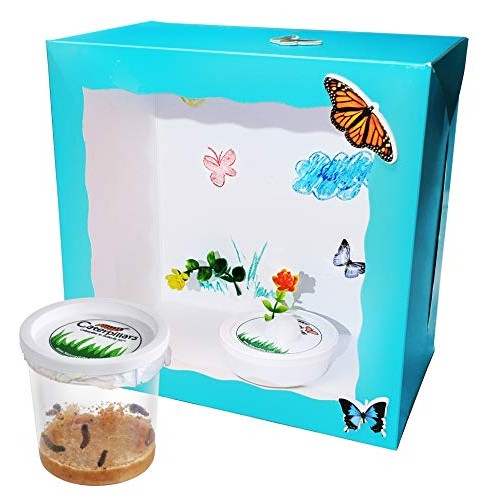 Nature Gift Store Live Butterfly Kit Shipped with 5 Painted Lady Caterpillars Now-Crafty Box Version