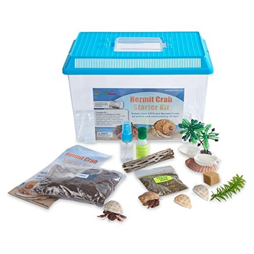 Nature Gift Store Live Pet Hermit Crab Complete Starter Kit – Shipped with 2 Crabs