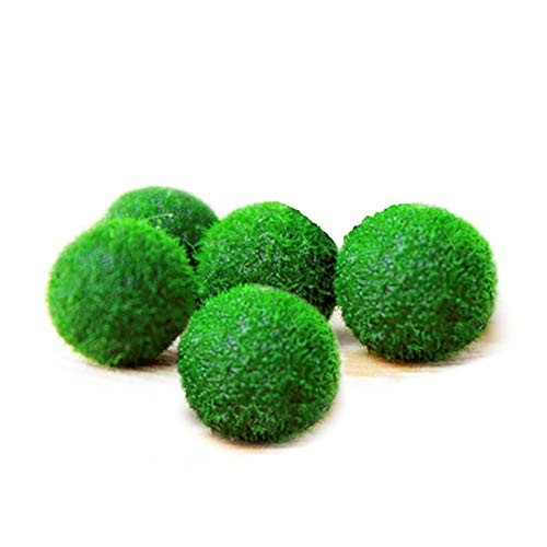 Luffy First Pet Plant Nano Marimo Moss Ball 06 Inches Fun Bright and Fluffy for Educational DIY Projects Instigate Learning Habitat 6 Pieces