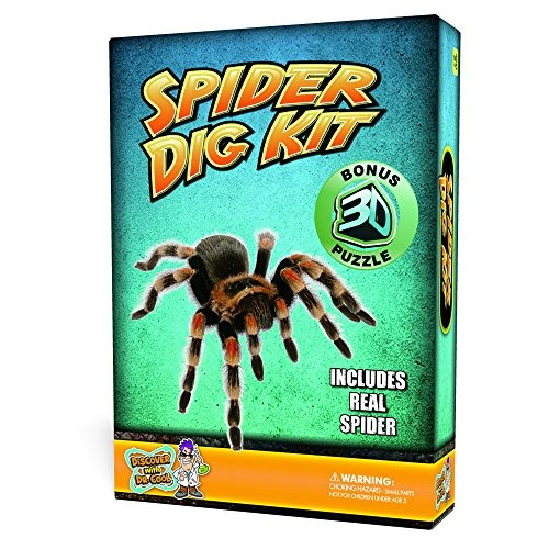 Spider Puzzle Dig Kit Excavate A Real Preserved Spider