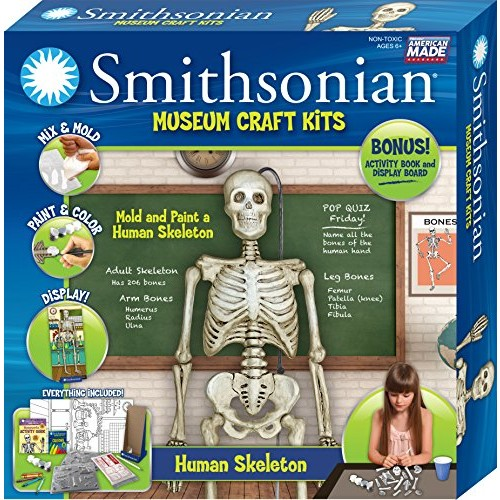 Smithsonian 18 Human Skeleton Perfect Cast Museum Paint Display and Learn Craft Kit