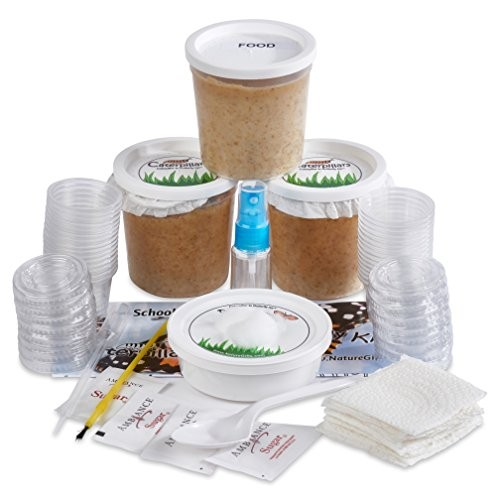 Nature Gift Store 30 Live Caterpillars Shipped Now Butterfly Kit Refill for School Sized with Extra Larva Rearing Supplies