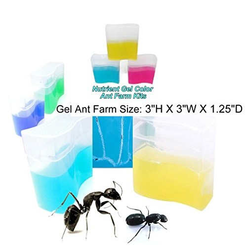 eco toys Blue Gel Ant Farm 1 Reality Show 24 7 365