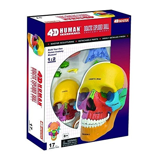 Nicky's Gift 4D Puzzle Didactic Exploded Beauchene Skull Color Human 1 2 Anatomy 3D Model NEW