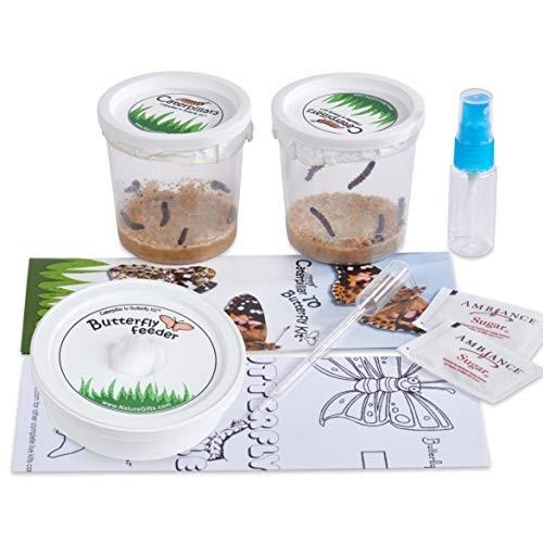 Nature Gift Store 10 Live Caterpillars Shipped Now Butterfly Kit Refill