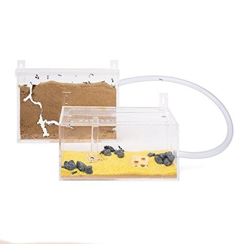 Sand Ant Farm Wall Kit Anthill Formicarium Educational Ants