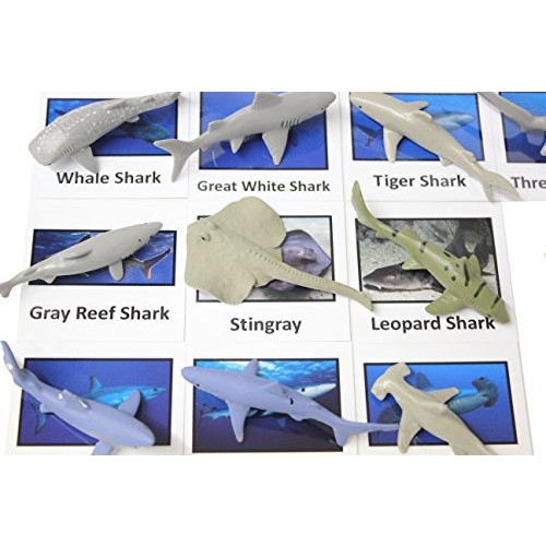 Curious Minds Busy Bags Montessori Sharks Animal Match Cards and Figurines Nomenclature Science Work Continent Box