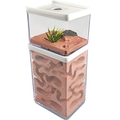 MOCOHANA Ant Farm Box Home for Kids Study of Behavior Nest Educational Formicarium