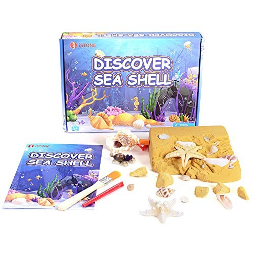 iSTONE Excavation Kit 20 Sea Shell Dig It Up Great Science Gift for Children
