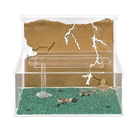 Sand Ant Farm L Formicarium Anthill Formicarium Educational Ants