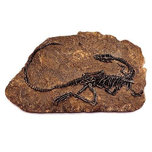 Tyrannosaurus Rex Dinosaur Fossil Jurassic Cretaceous 130 Million Years Old for Kids Science Education Toy