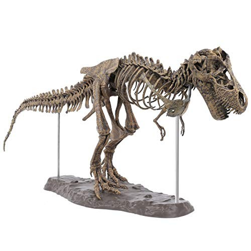 HIUHIU Large Dinosaur Fossil Skull Animal Model Toys Tyrannosaurus Rex Assemble The Skeleton Furnishing Articles Decoration