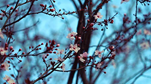 YDYHYANG Paint by Numbers Kits with Brushes and Acrylic Pigment Cherry Tree Branch Painting Kit Art Craft for Home Wall Decor 4050cm