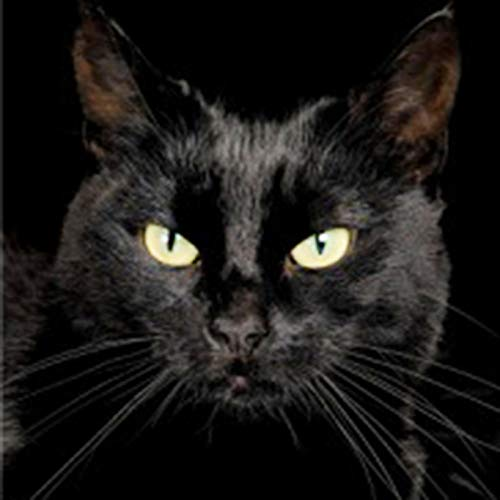 Diy 5D Diamond Painting Kit Black Cat Round Full Drill Embroidery Cross Stitch Arts Craft Canvas Supply For Home Wall Decor Adults And Kids-16×16 Inches