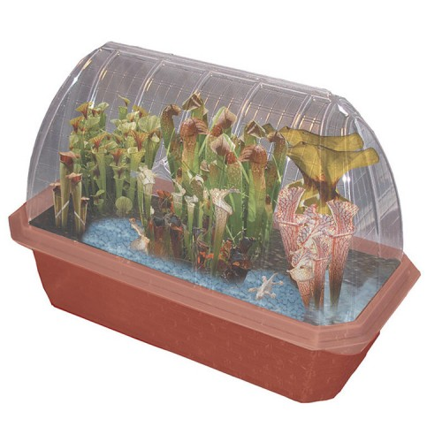 Pitcher Plant Predators – Windowsill Greenhouse Plant Kit