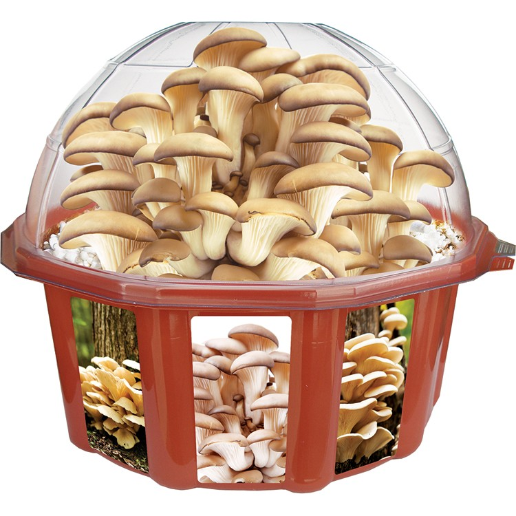Grow Your Own Oyster Mushrooms Plant Kit Educational