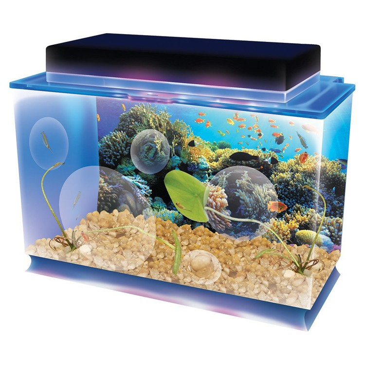 Seaquarium Deluxe Aquatic Life Science Kit Educational