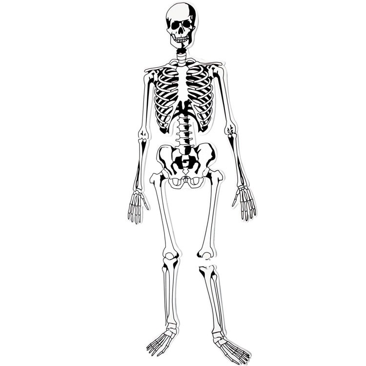 human skeleton floor foam puzzle - educational toys planet, Skeleton