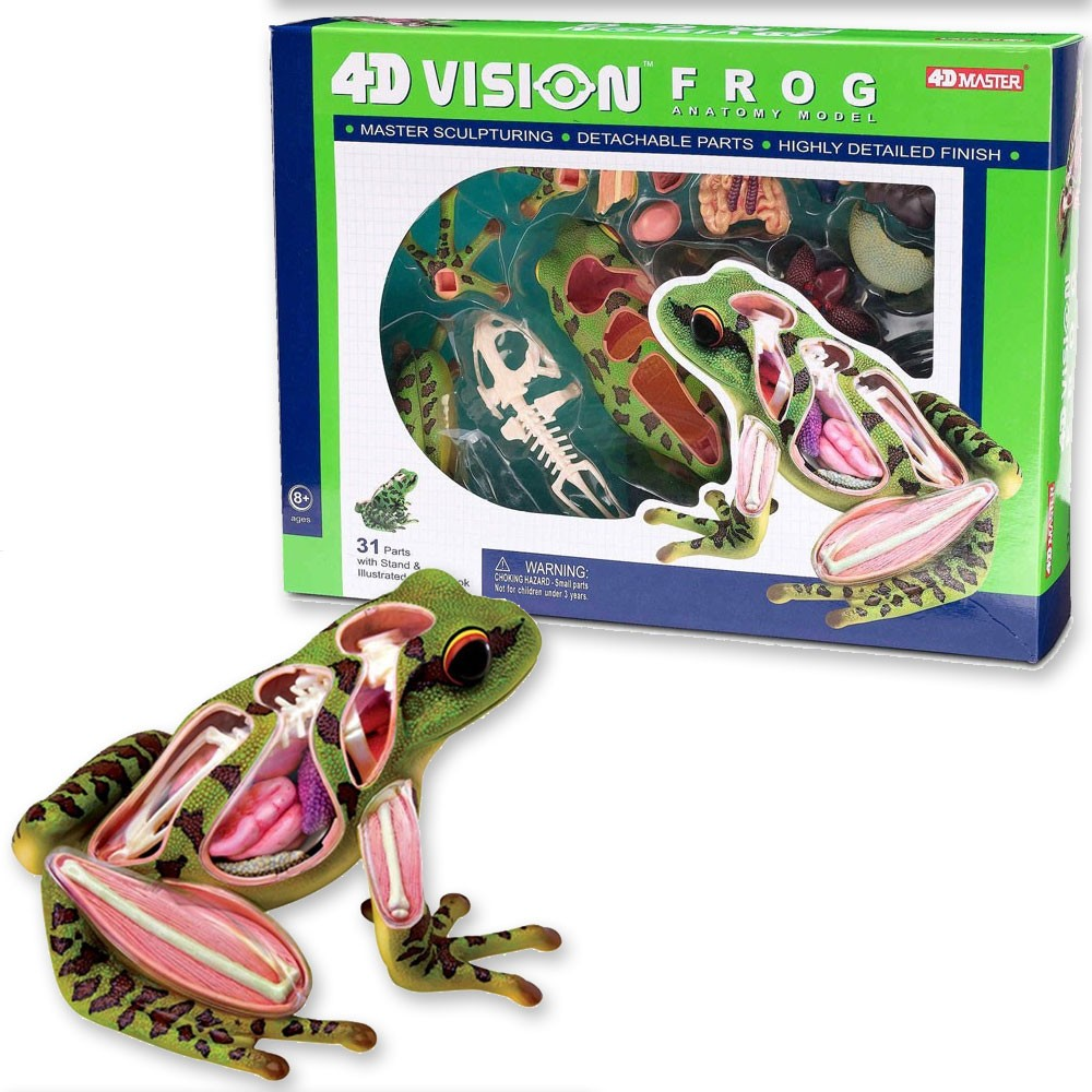 4D Vision Frog Anatomy Model - Educational Toys Planet