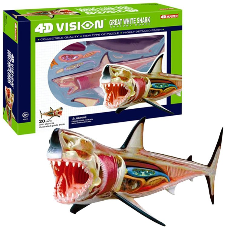 4D Vision Great White Shark Anatomy Model - Educational Toys Planet