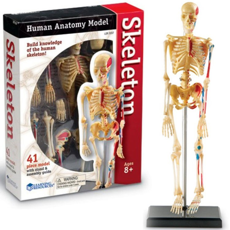 human body - educational toys planet, Skeleton