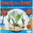 Beach in a Bowl Palm Tree Growing Glass Terrarium Kit