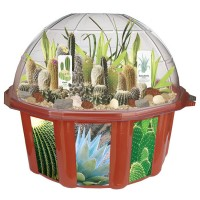 Desert Biodome Terrarium Plant Growing Kit