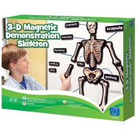 Human Skeleton 36 inches Magnetic 3D Demo Science Model