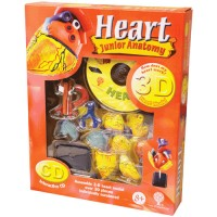 Human Heart 3D Anatomy Model with CD Science Set