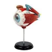 Human Eyeball 3D Anatomy Model with CD Science Set