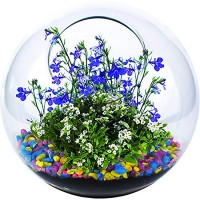 Mini Fairy Garden Glass Terrarium Kit