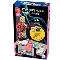 Human Body 10 Inches Anatomy Model AR Edition