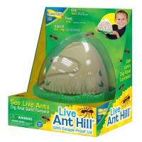 Live Ant Hill Ants Habitat Kit