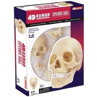 4D Human Exploded Skull Anatomy Model