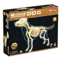 4D Vision Dog Full Skeleton Model